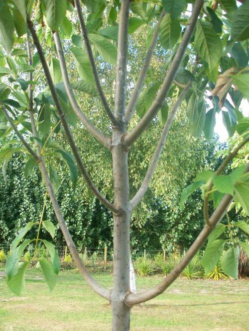 even branching